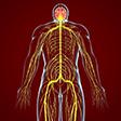 Nerve Restoration